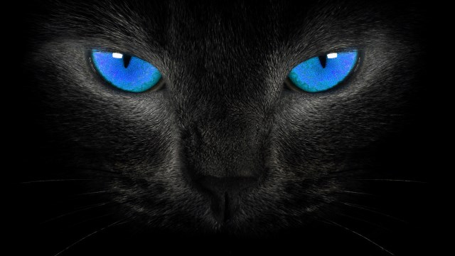 Black Cat and other myths