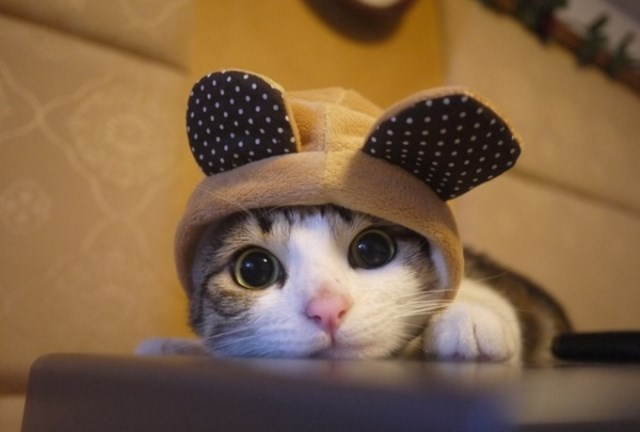 Kitty in Hoody