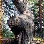 Cat Shaped Tree
