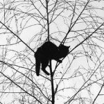 I Bet This Kitty is Stuck!