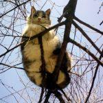 Fat Cat in a Tree