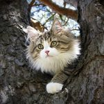 Kitty in the Crook of the Tree
