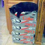 Rambo on my Diet Coke