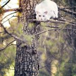 White Kitty Crouched in a Tree