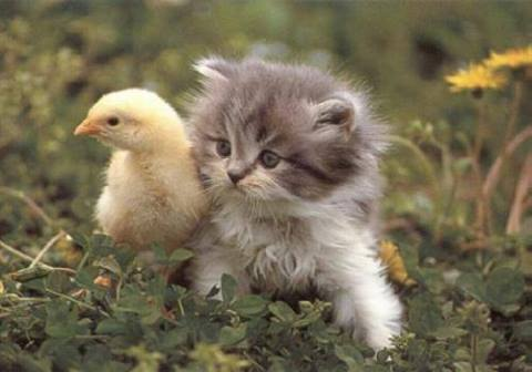 Kitty and Duckie