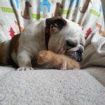 Hammie Cuddles A Kitten