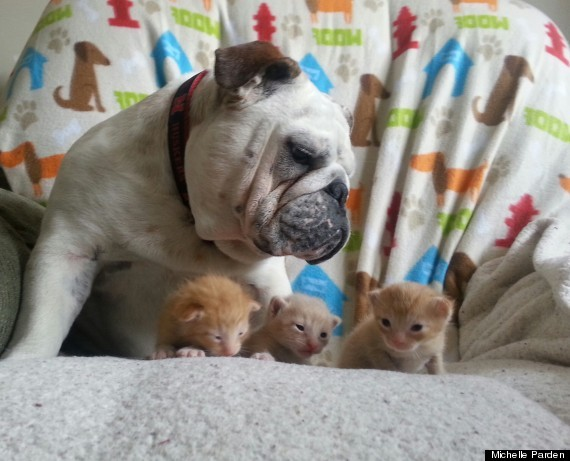 Hammie Taking Care of the Kittens