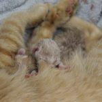 The Kittens Nursing