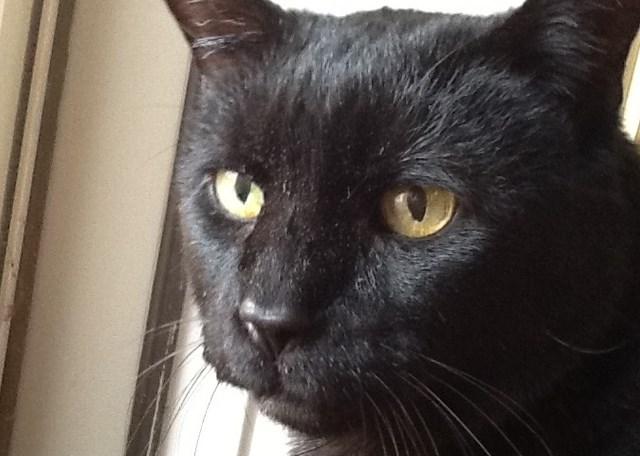 Milton the Cat