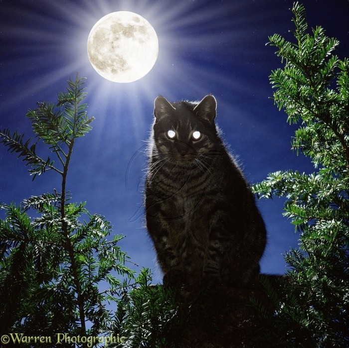 Cat Out at Night