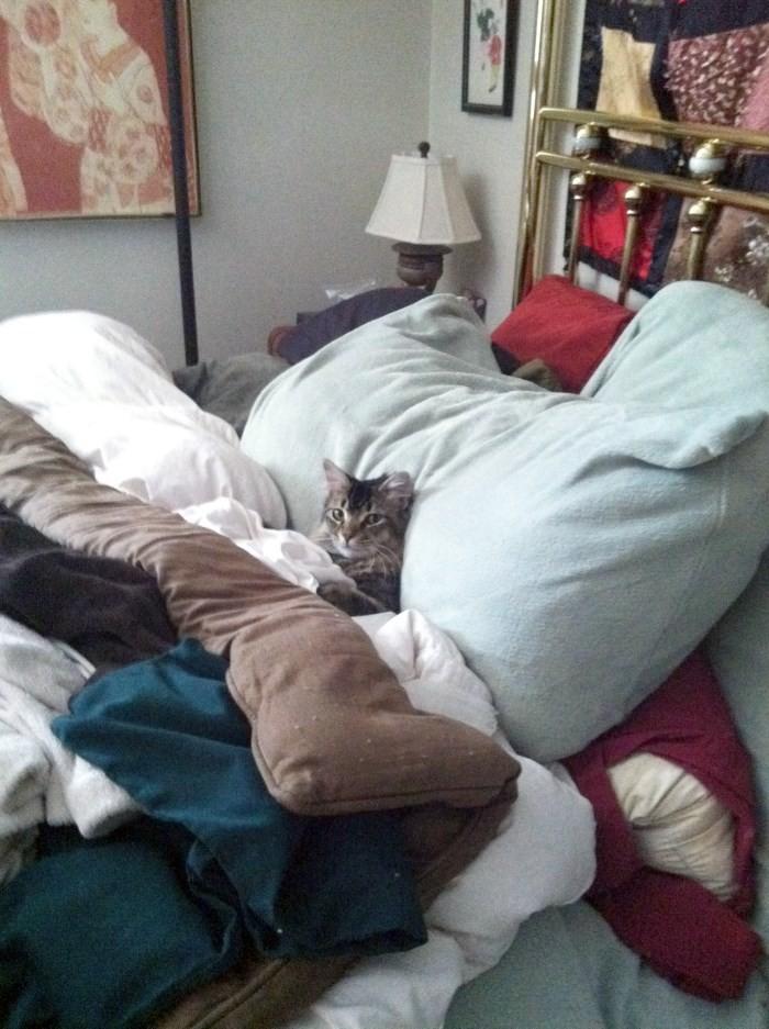 Comfy in Bed