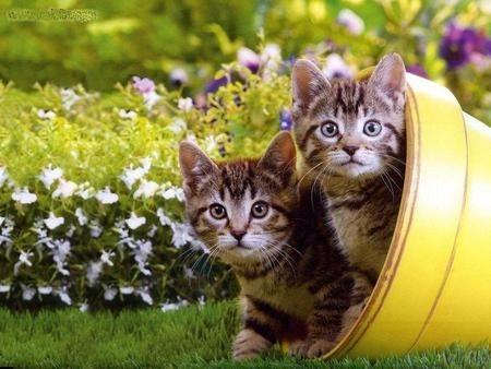 Kittens in Flower Pot