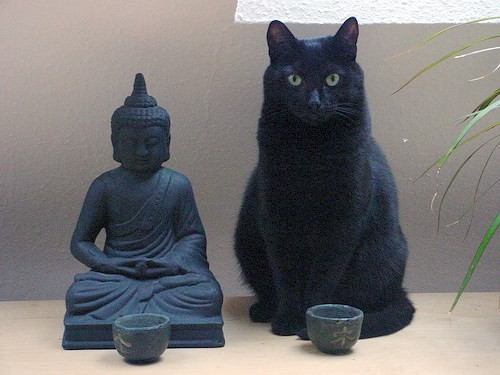 Buddha and the Cat