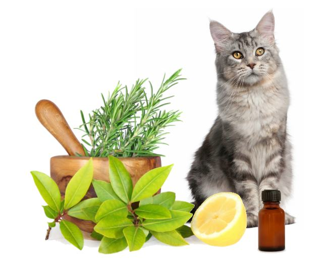 AromaTherapy Cat