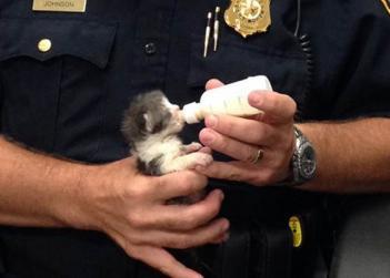 Fort Worth Kitten