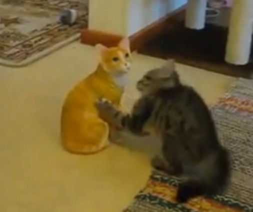 Kitty Plays with Statue
