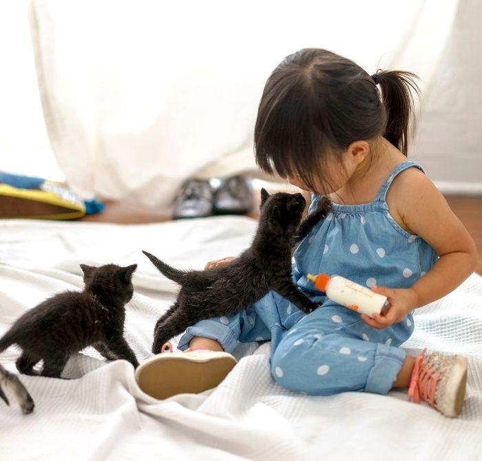 Little Girl Feeds Kittens