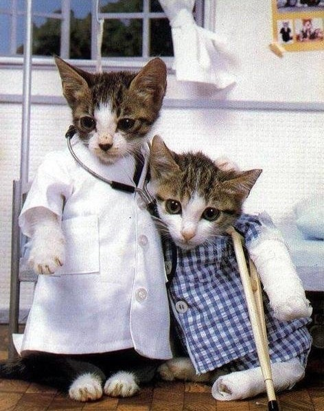 Doctor and Patient Cats
