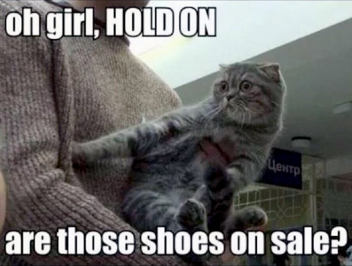 Cat Sees Shoes on Sale