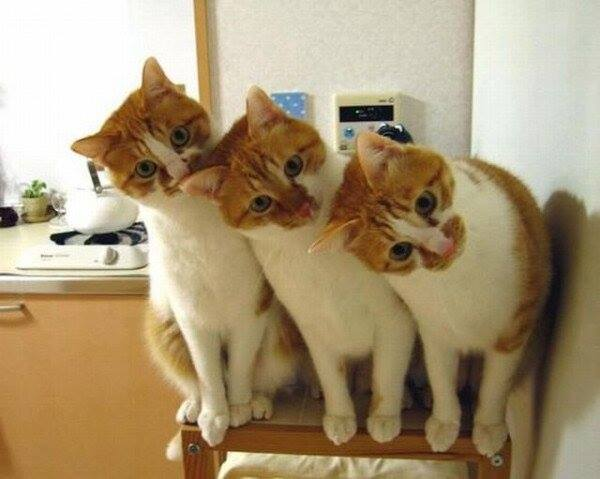 3 cats on a chair