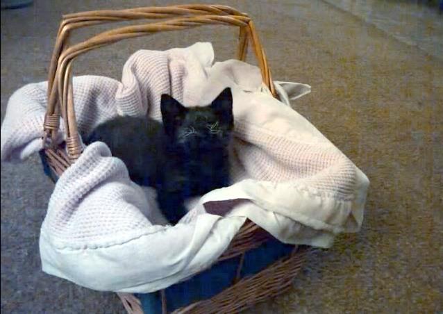 Loki the Blind Kitten