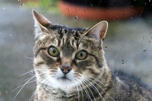 Cat in Rain