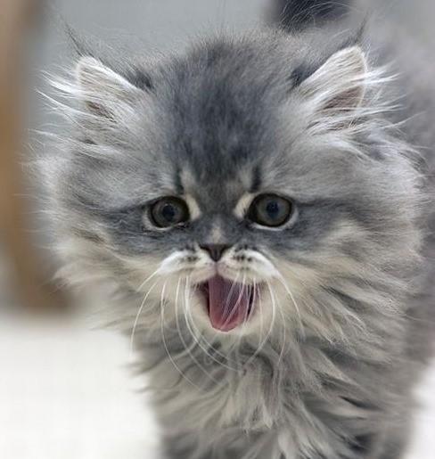 Friday Kitten