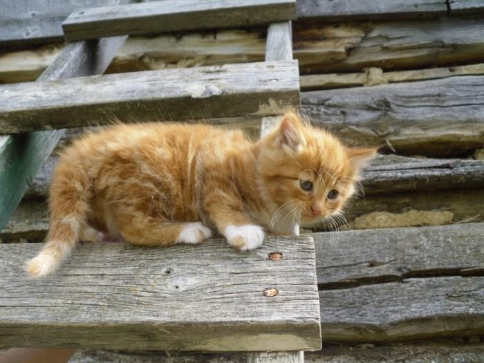 Cat Stuck on a Wooden Ladder