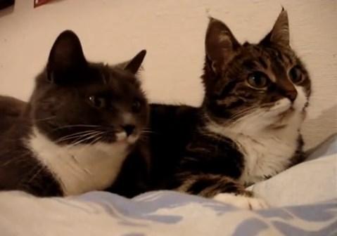 2 Cats Talking