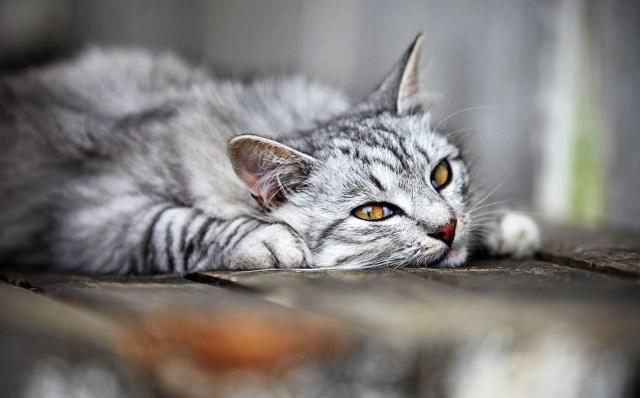 Sick Kitty?