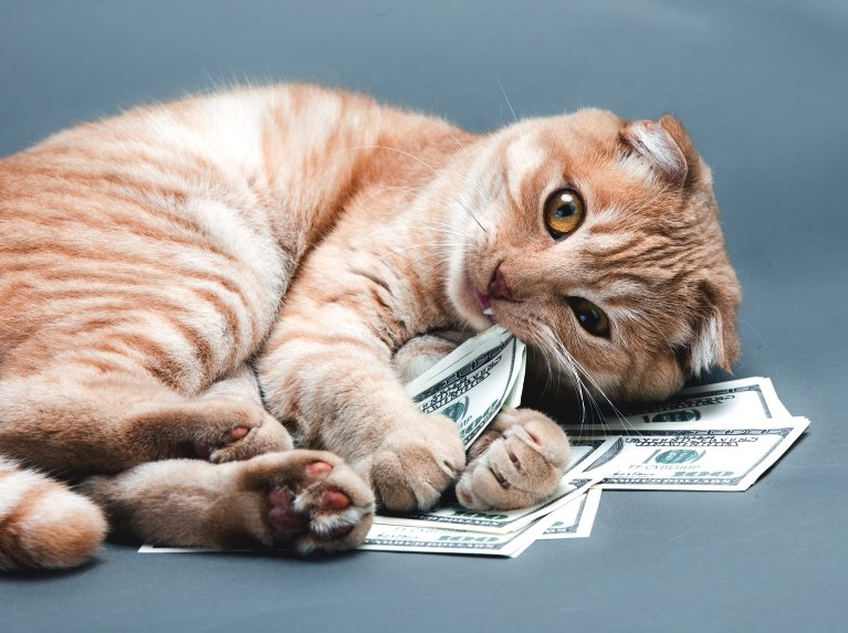 Expensive Cats