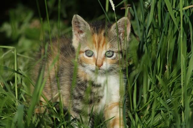 Sweet Kitten in the Grass