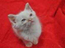 April the Kitten