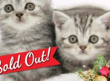 Cats Sold Out