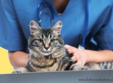 Cat Visiting the Vet
